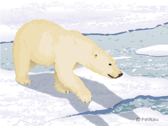 Polar Bear by Karen Patkau